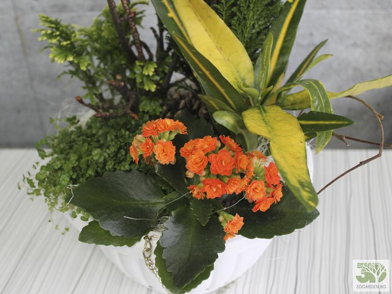 Мини аранжировка с растения